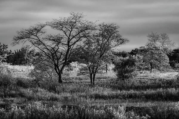 Photograph - New England Serengeti Bw by Simmie Reagor