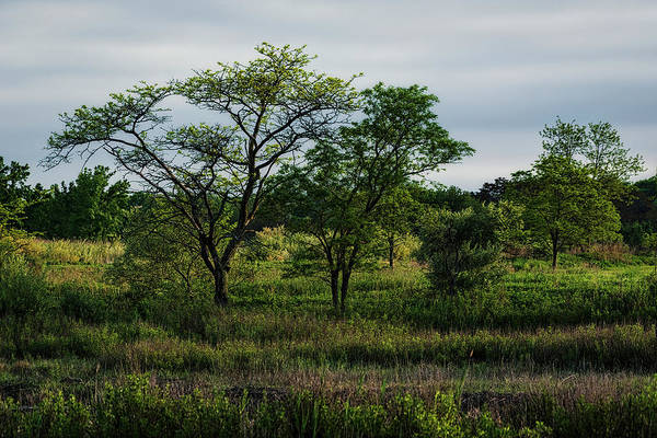 Photograph - New England Serengeti by Simmie Reagor