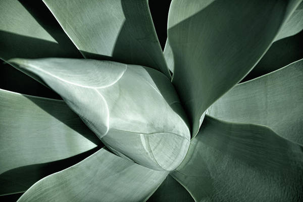 Photograph - New Growth II by Leda Robertson