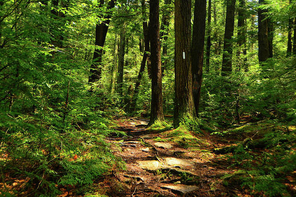 Photograph - New Hampshire Appalachian Trail by Raymond Salani III
