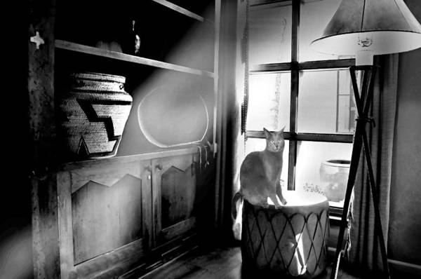Wall Art - Photograph - Sante Fe Window Cat by Diana Angstadt
