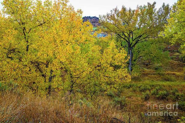 Photograph - New Season Beginning by Jon Burch Photography