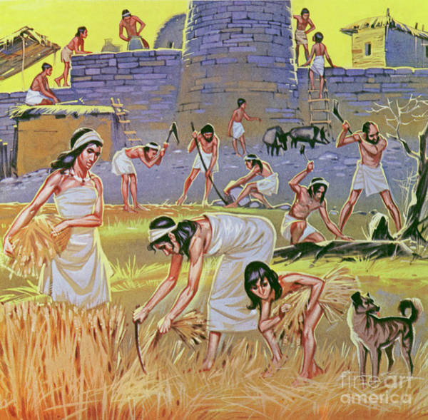 Wall Art - Painting - New Stone Age Farmers  by Angus McBride