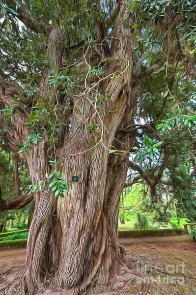 Pohutukawa Photograph - New Zealand Christmas Tree by Eva Lechner