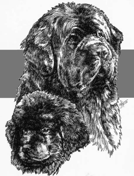 Drawing - Newfoundland And Pup by Barbara Keith
