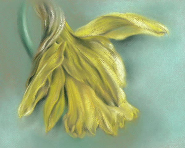 Pastel - Newly Blossoming Yellow Daffodil by MM Anderson