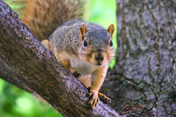 Photograph - Nice Fingers Mr. Squirrel by Don Northup