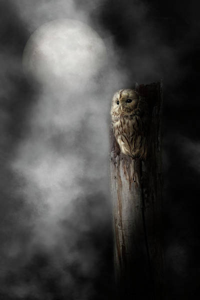 Photograph - Night Owl 2019 by Bill Wakeley