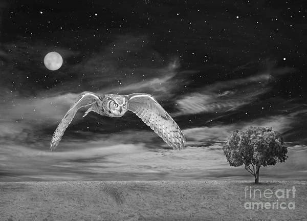 Wall Art - Photograph - Night Owl Bw by Laura D Young