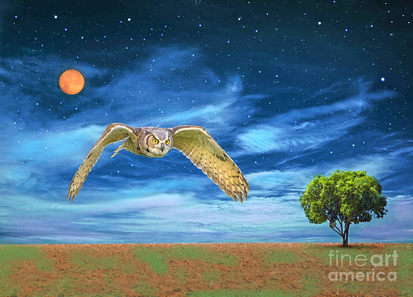 Wall Art - Photograph - Night Owl  by Laura D Young
