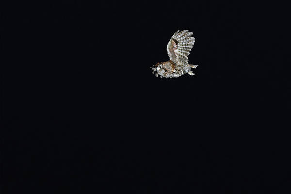 Wall Art - Photograph - Night Phantom In-flight by Asbed Iskedjian