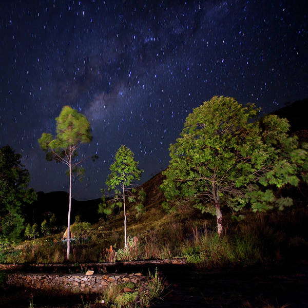Minas Gerais Wall Art - Photograph - Night Scene With Trees And Milky Way by Photographed By Jorge Santos