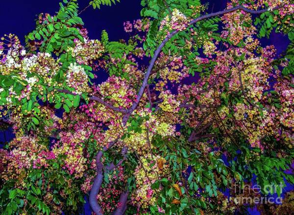 Photograph - Night Sky - Tropic Flowers by D Davila