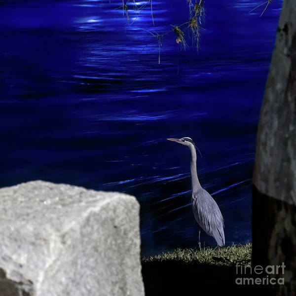 Photograph - Night Stalker-1 by Charles Hite