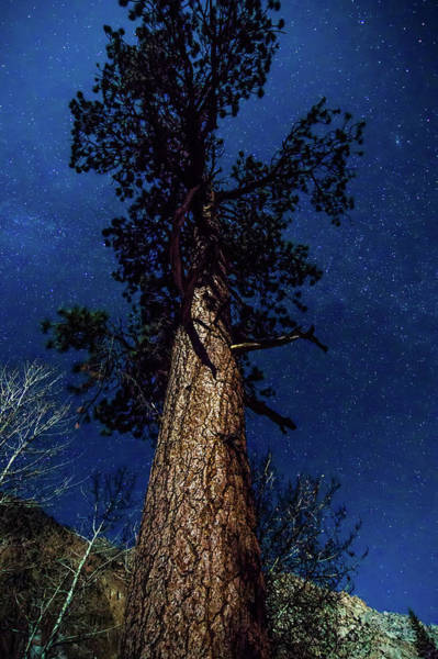 Photograph - Night Time And Tall Tree Near Yosemite National Park by Alex Grichenko