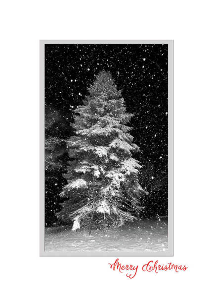 Photograph - Night Tree With Snowflakes by Denise Beverly