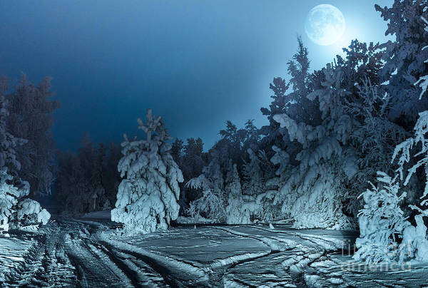 Dark Shadows Photograph - Nightly Landscape With Fir Forest Snow by Polina Petrenko