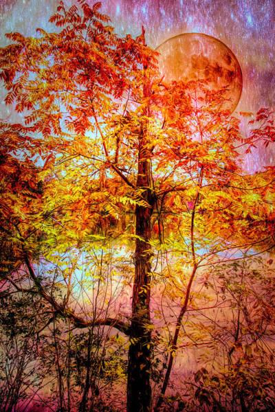 Wall Art - Photograph - Nighttime Autumn Moon by Debra and Dave Vanderlaan
