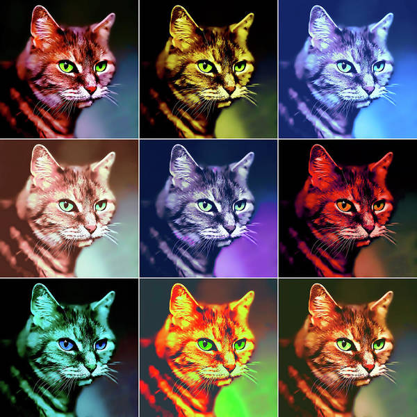 Photograph - Nine Lives Pop Art by Peggy Collins