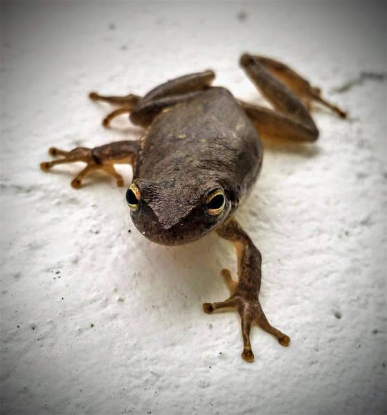 Photograph - Ninja Frog by Vincent Autenrieb