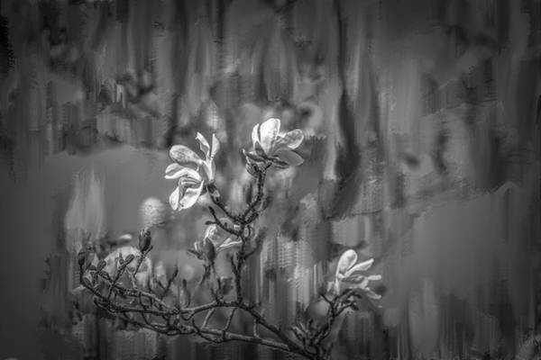 Mixed Media - no rain no flowers BW #i6 by Leif Sohlman
