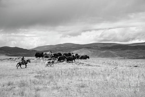 Photograph - Nomads by Peng Shi
