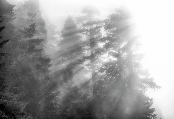 Photograph - Norcal Redwoods #1 by Joseph S Giacalone