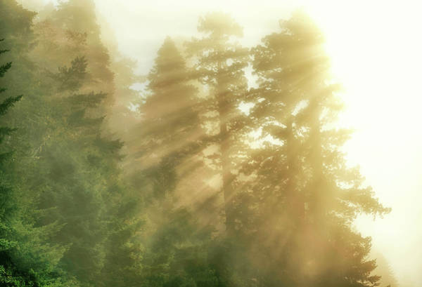 Photograph - Norcal Redwoods #2 by Joseph S Giacalone