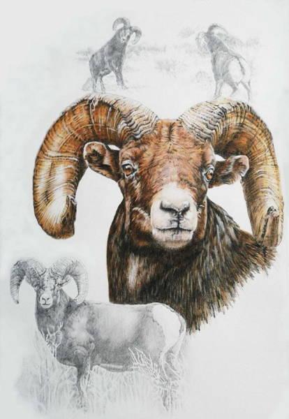 Mixed Media - North American Big Horn Sheep by Barbara Keith
