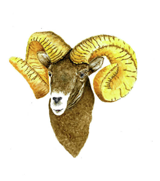 Wall Art - Painting - North American Bighorn Sheep by Michael Vigliotti