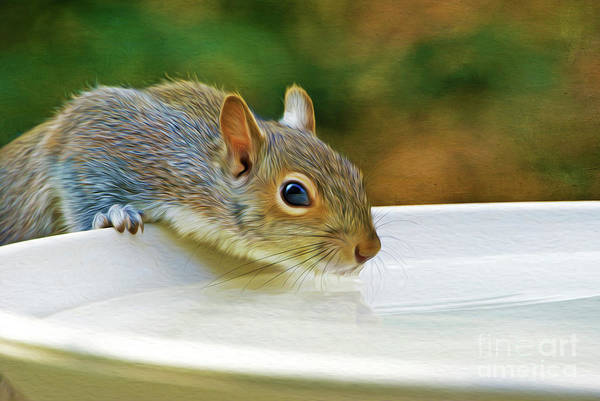 North American Wildlife Photograph - North American Ground Squirrel by Laura D Young