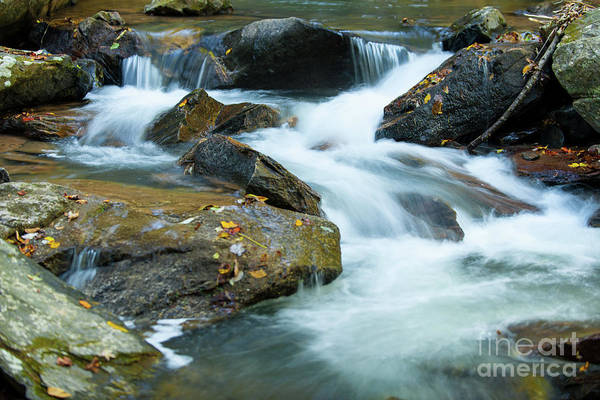 Photograph - North Carolina Rivers by Dale Powell