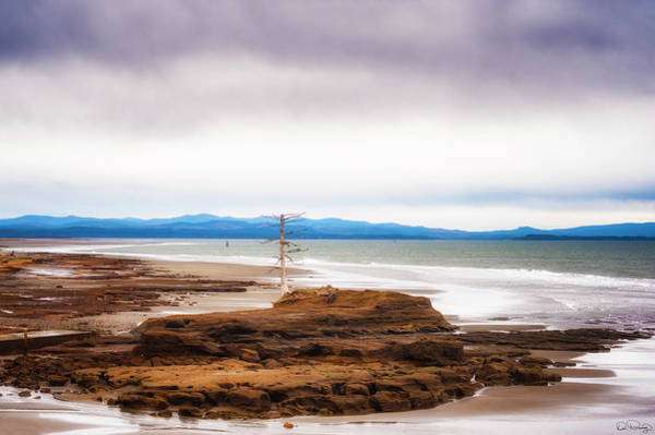 Photograph - North Cove Bay by Dee Browning