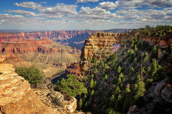 Wall Art - Photograph - North Rim Grand Canyon National Park Vii by Ricky Barnard