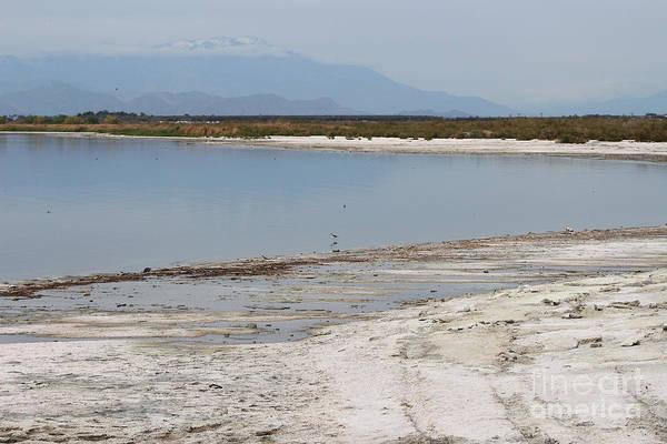 Photograph - North Shore Of Salton Sea by Colleen Cornelius