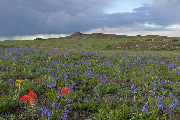 Photograph - North Table Mountain Evening Wildflower Landscape 1 by Cascade Colors