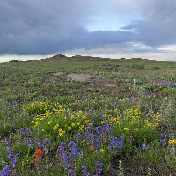 Photograph - North Table Mountain Evening Wildflower Landscape 2 by Cascade Colors