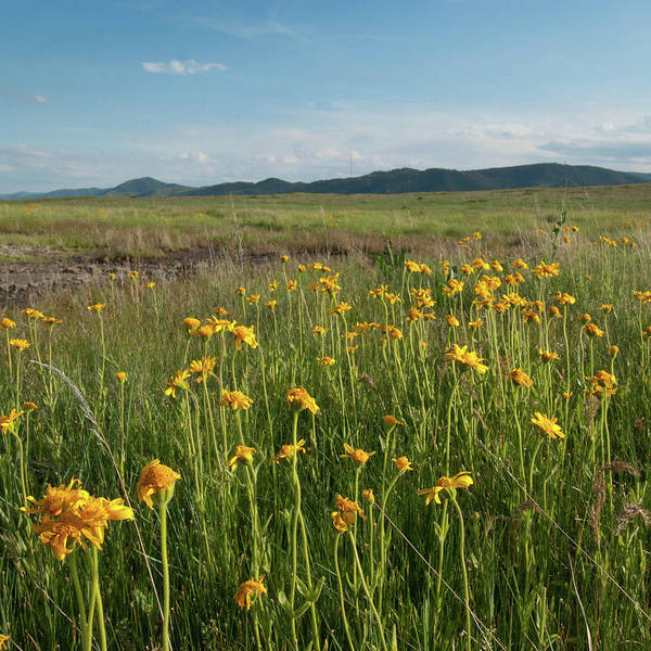 Photograph - North Table Mountain Wetland Wildflower Landscape by Cascade Colors