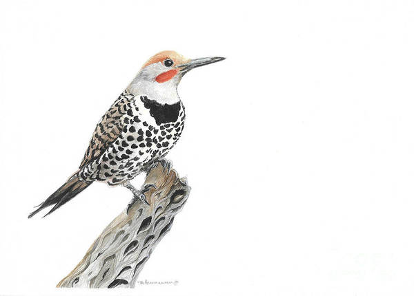 Northern Flicker Painting - Northern Flicker by Tracey Hunnewell