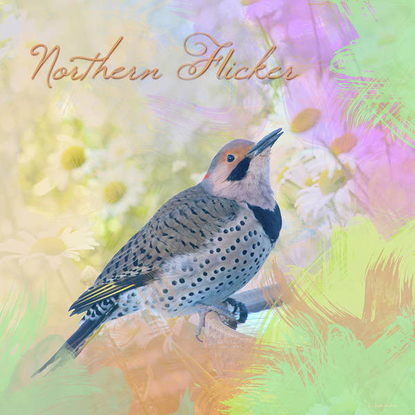 Northern Flicker Watercolor With Daisies Art Print