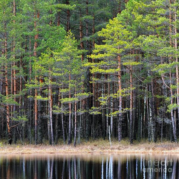 Late Wall Art - Photograph - Northern Forest Landscape With A Lake by Aleksey Stemmer
