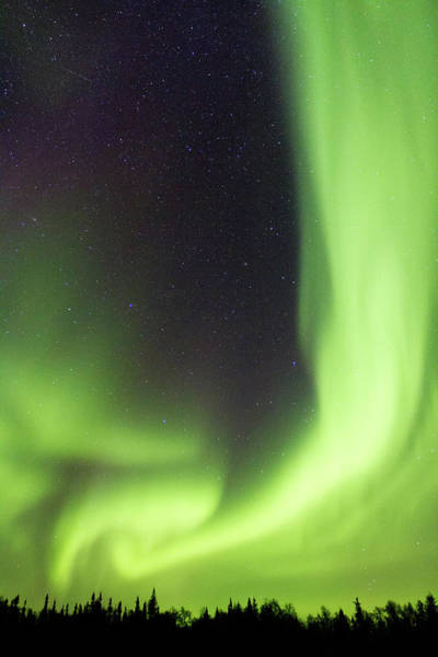 Yellowknife Wall Art - Photograph - Northern Lights Dance Above Silhouetted by Coal Photography/alexander Legaree