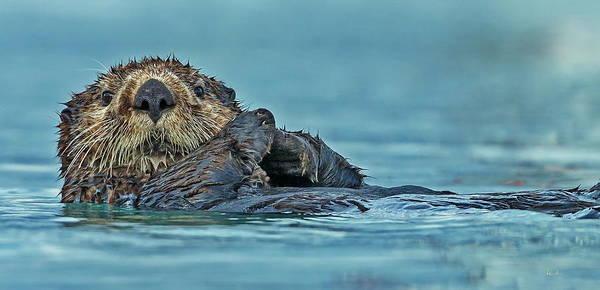 Wall Art - Digital Art - Northern Sea Otter In Alaska by Russ Harris