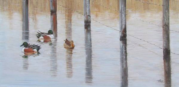 Painting - Northern Shovellers by Tammy Taylor