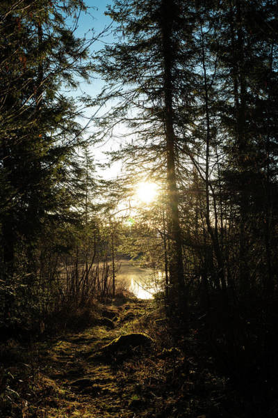 Wall Art - Photograph - Northwoods Pond Trail by Steve Gadomski