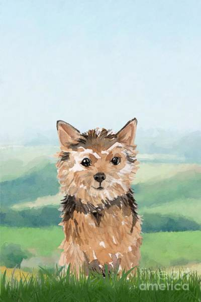 Pedigree Painting - Norwich Terrier by John Edwards