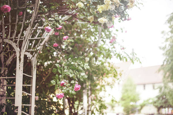 Photograph - Nostalgic Roses Of Franciscan Garden 1 by Jenny Rainbow