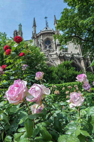 Wall Art - Photograph - Notre Dame, Paris, France by Lisa S. Engelbrecht