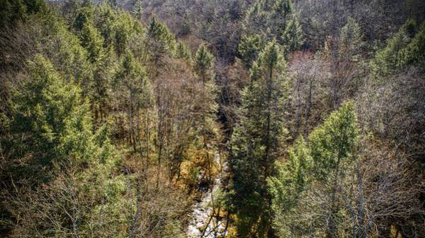 Photograph - Ny Forest  by Ants Drone Photography