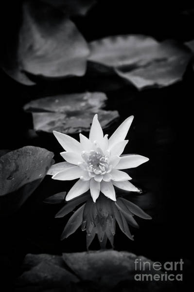 Lilly Pad Photograph - Nymphaea Gold Medal Flower by Tim Gainey